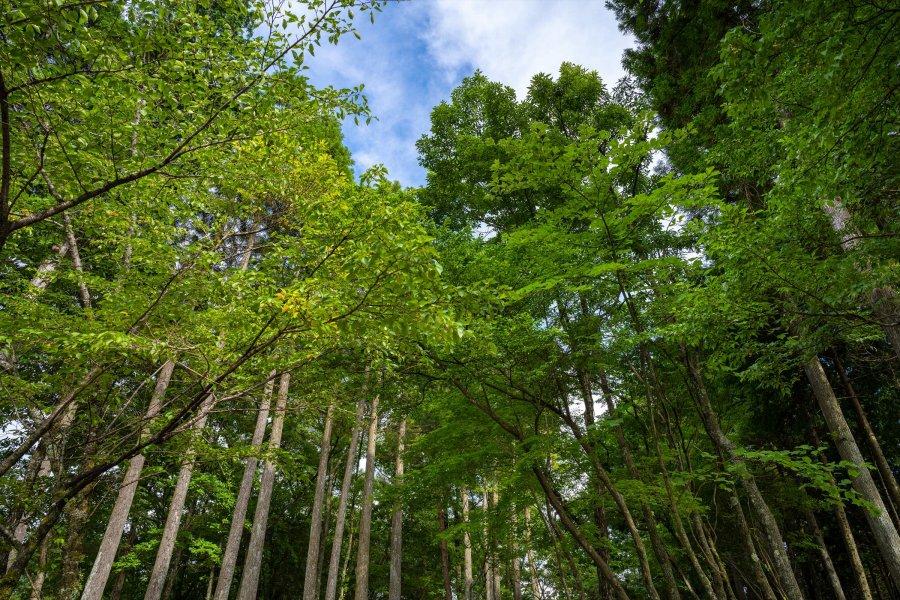 地元・湯布院での林業への転身